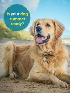 Is your dog summer ready